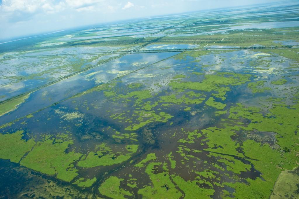 Louisiana wetlands aerial photo